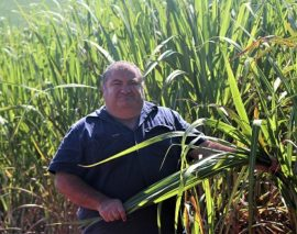 $1.2M water quality grants round opens for cane growers