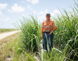 Rise in Mixed Species Fallow Crops